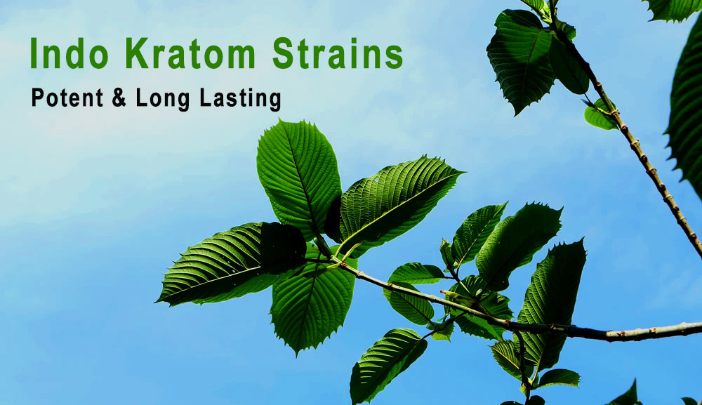 Indo Kratom Review