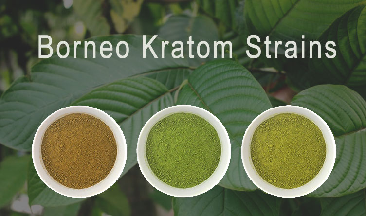 borneo-kratom-strains